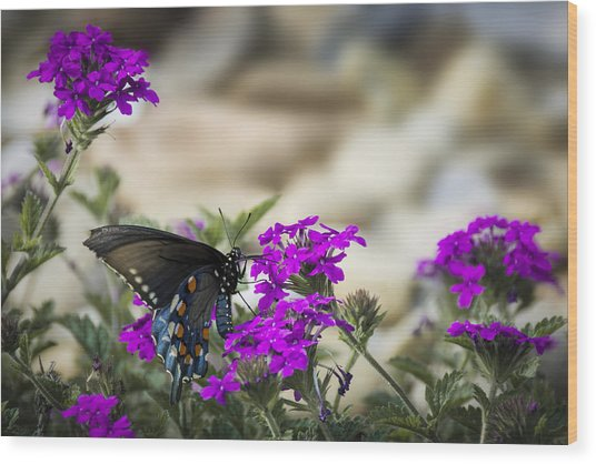 Still Beautiful Swallowtail Wood Print