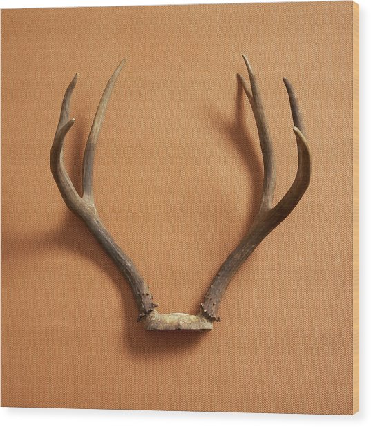 Still Life Of Deer Antlers On A Fabric Wood Print by Gwen Rodgers