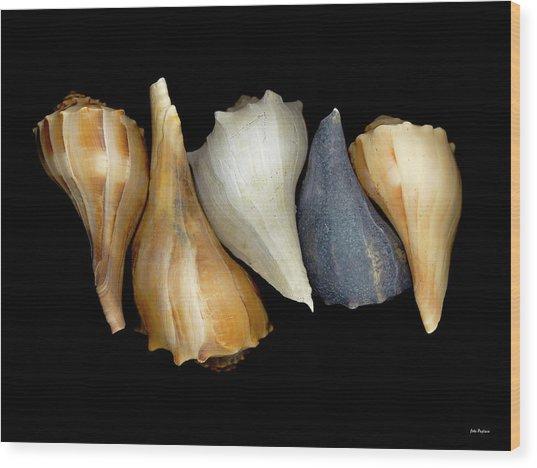 Still Life With Five Whelk Shells Wood Print