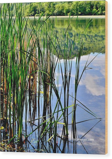 Still Waters Wood Print