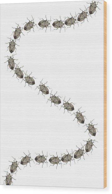 Stink Bugs I Phone Case Wood Print