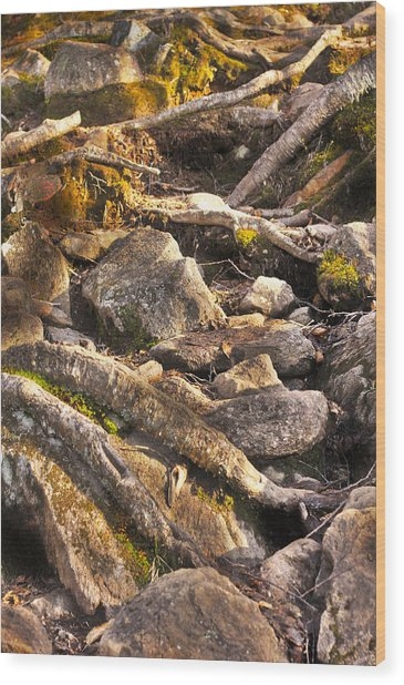 Stones And Roots Wood Print by Alex Wrenn