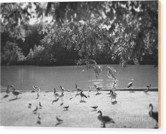 Stony Brook Pond Wood Print
