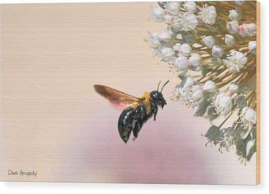 Stop And Smell The Flowers Wood Print by Dave Hrusecky