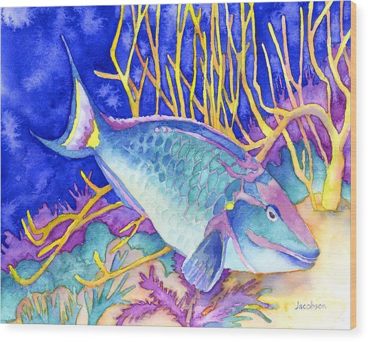Stoplight Parrotfish Wood Print