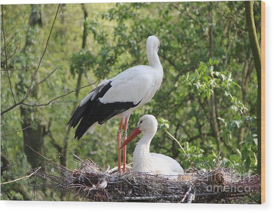 Storks Nesting Wood Print
