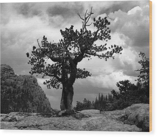 Storm Tree Wood Print