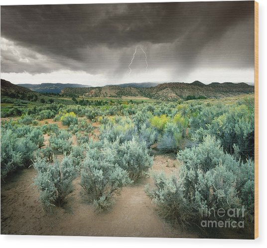 Storms Never Last Wood Print