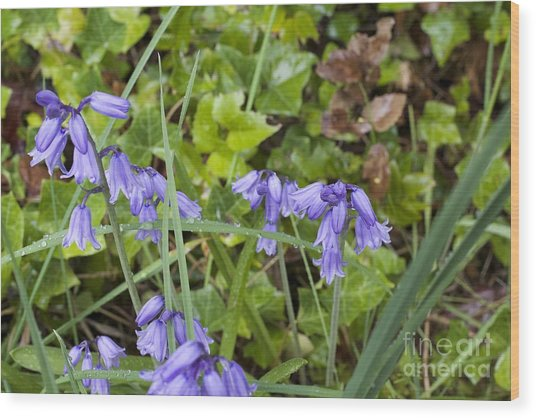 Stormy Wild Bluebell  Wood Print by Tim Rice