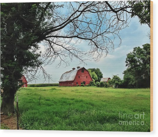 Stovall Farms In The Mississippi Delta Wood Print