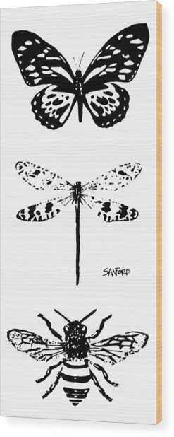Straighten Up And Fly Right Wood Print by Amanda  Sanford