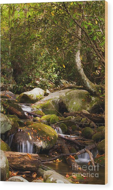 Stream At Roaring Fork Wood Print