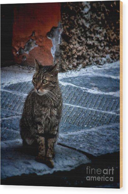 Street Cat Wood Print