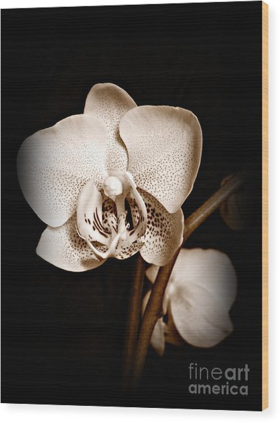 Strength And Beauty Sepia Wood Print