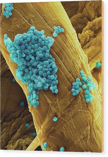 Streptococcus Pneumoniae Bacteria Wood Print by Steve Gschmeissner