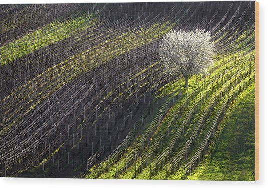 Strings Of Spring Wood Print