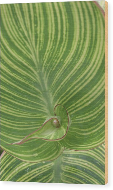 Striped Canna Leaf Abstract Wood Print