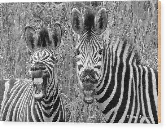 Striped Donkeys Zebra Chapman's Race Wood Print by Jonathan Whichard