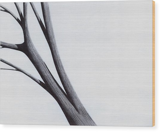 Strong Branches Between Light Wood Print