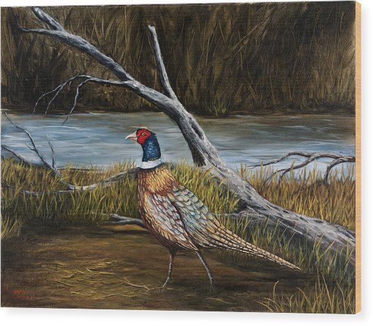 Strutting Pheasant Wood Print
