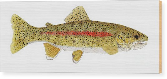 Study Of A Columbia River Erdband Trout Wood Print
