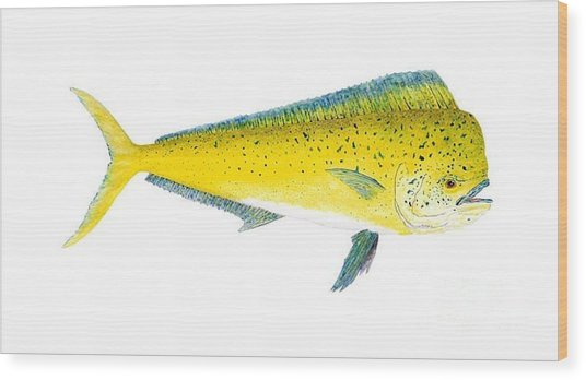 Study Of A Mahi Mahi Wood Print