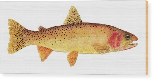 Study Of A Yellowstone Cutthroat Trout Wood Print