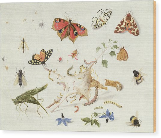 Study Of Insects And Flowers Wood Print