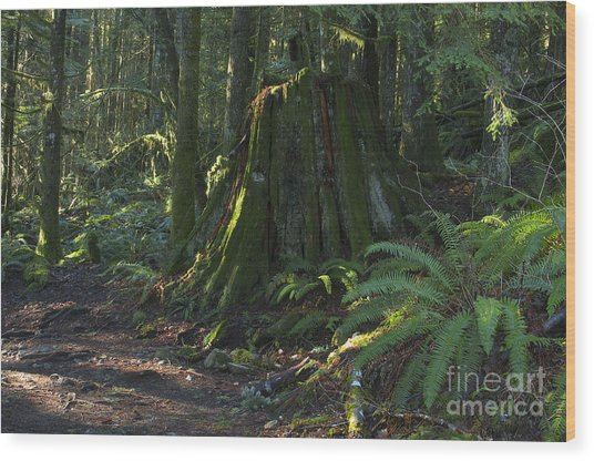 Stump And Fern Wood Print by Sharon Talson