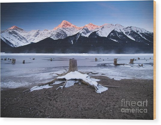 Stumps At Spray Lakes Wood Print by Ginevre Smith