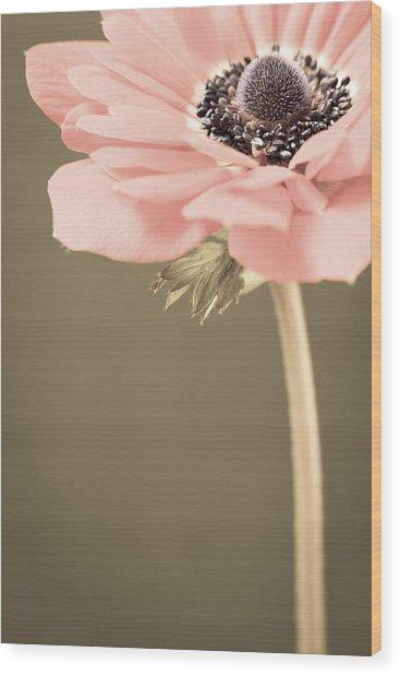 Subdued Anemone Wood Print