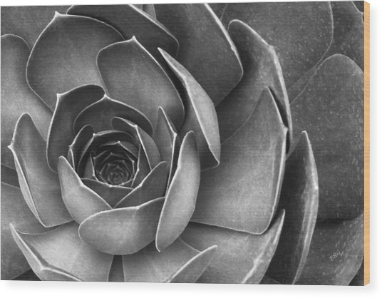 Succulent In Black And White Wood Print