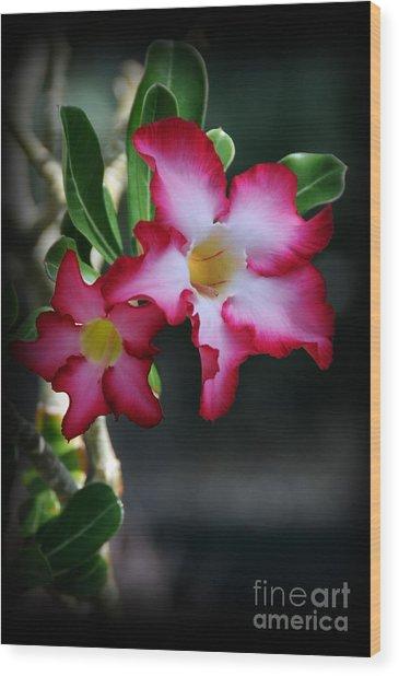 Succulent Red Bloom Wood Print