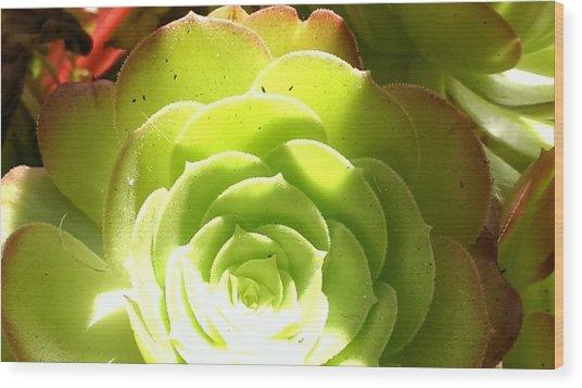 Succulent Sunshine Wood Print by Bill Mohler