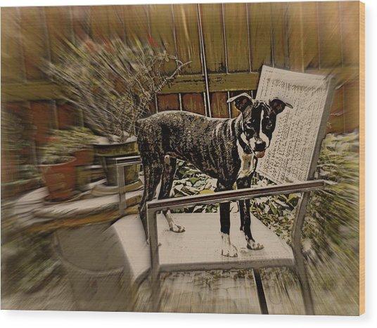 Sufferin Succotash Wood Print by Tg Devore