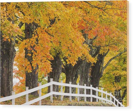 Sugar Maple Color Wood Print
