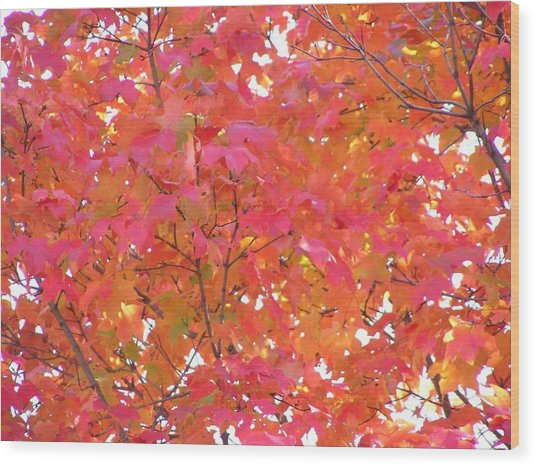 Sugar Maple Wood Print