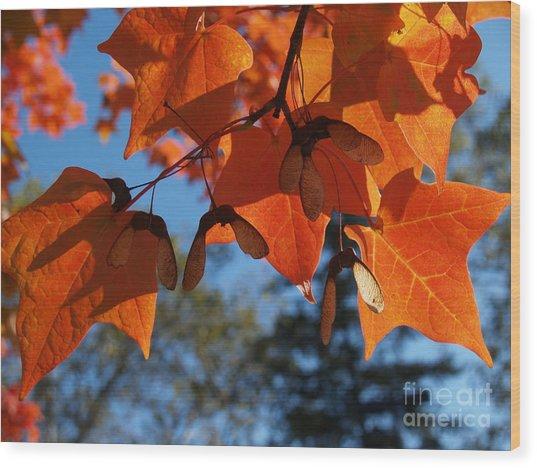 Sugar Maple Leaves From Below Wood Print