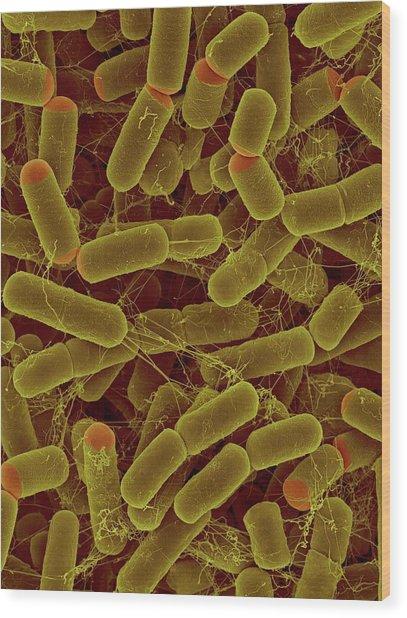 Sulfitobacter Pontiacus Wood Print by Dennis Kunkel Microscopy/science Photo Library