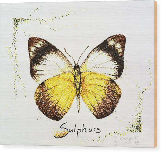 Sulphurs - Butterfly Wood Print