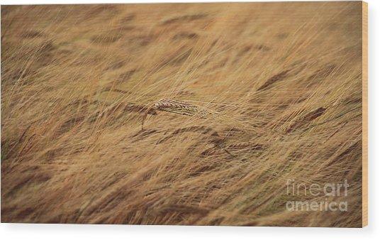 Summer Breeze Wood Print by Peter Skelton