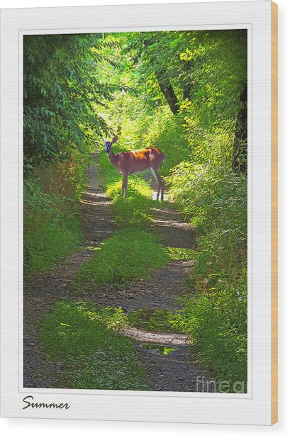 Summer Deer Wood Print