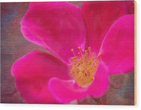 Summer Delight My Pink Rose Wood Print