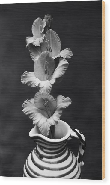 Wood Print featuring the photograph Summer Glads by Ben Shields