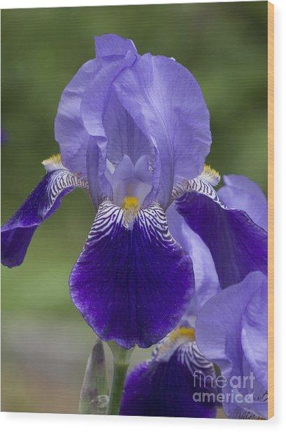 Summer Iris Wood Print