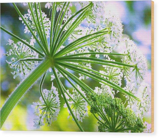 Summer Lace Wood Print