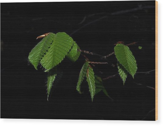 Summer Leaves On Black Wood Print