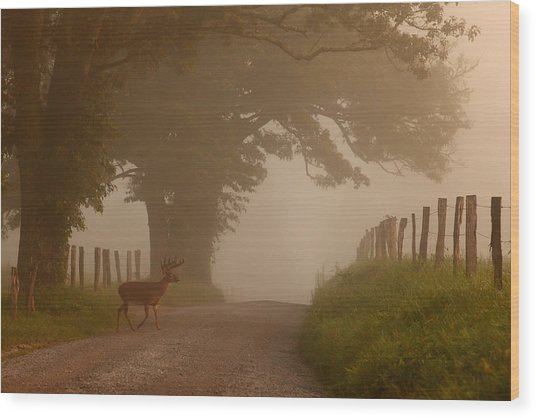 Summer Morning Stroll Wood Print by Yoder Images