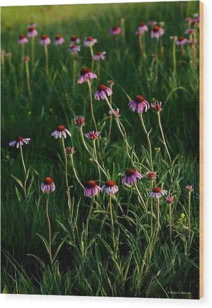 Summer Of Echinacea Wood Print