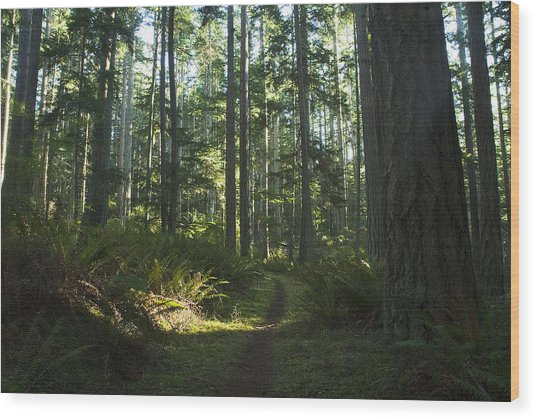 Summer Pacific Northwest Forest Wood Print